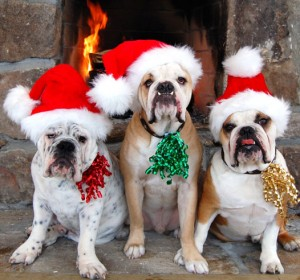 happy holidays dog owners