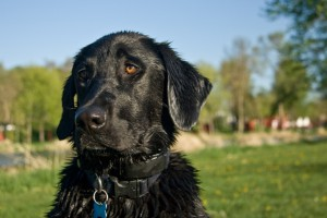 dog obedience training tucson